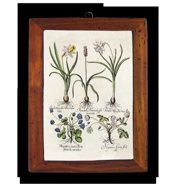 Narcyssus, Hyacintus, Anemone