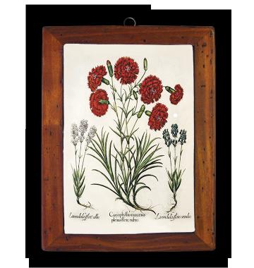 Lavandula, Dianthus